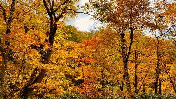 北海道の紅葉37の写真