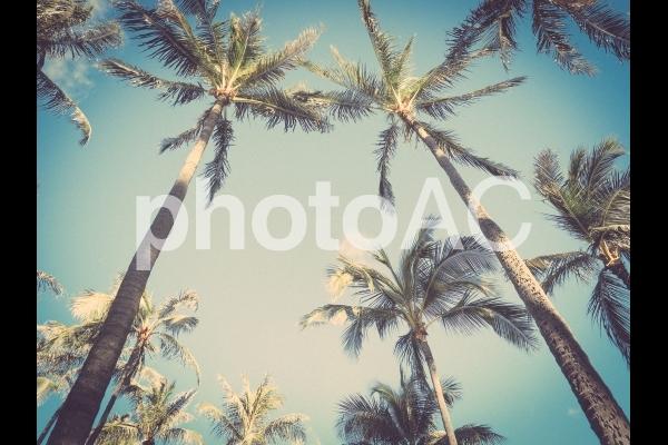 ワイキキビーチのヤシの木の写真