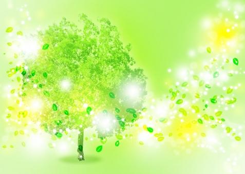 木 樹木 自然 エコ エコロジー 癒し ヒーリング スピリチュアル 植物 輝き 光 光彩 緑 グリーン ナチュラル ネイチャー キラキラ きらきら 環境 環境保護 環境保全 自然保護 省エネ 省エネルギー 疲労回復 セラピー セラピスト 精神安定 リラクゼーション リラックス