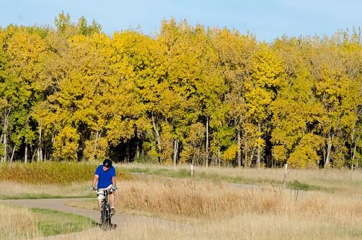 自然 風景 景色 環境 スナップ 旅行 散歩 公園 森林 緑 林 小さい 秋 季節 葉っぱ 植物 美しい きれい シルエット 樹木 草花 癒し 紅葉 行楽 枯れる シーズン 旬 空 青空 赤い 人物 男性 自転車 サイクリング