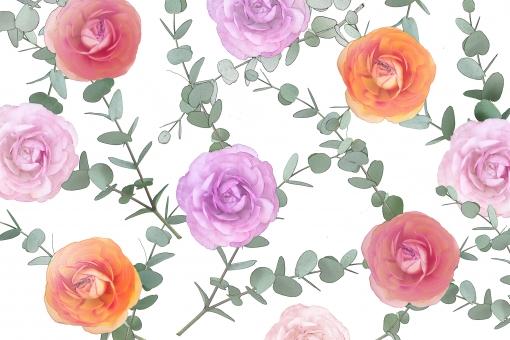 ラナンキュラス ユーカリ 花 葉っぱ 葉 植物 壁紙 テクスチャ