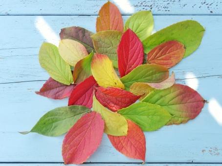 カラフルな落ち葉の写真