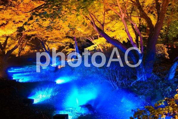六義園の紅葉ライトアップの写真