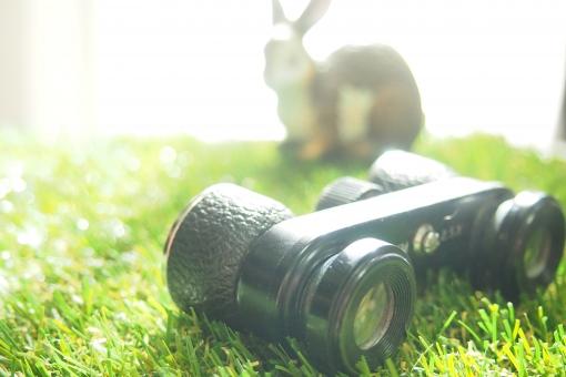 芝生 屋外 明るい 光 緑 うさぎ ウサギ 兎 動物 双眼鏡 覗く 見る 発見 望遠 雑貨 コンサート ライブ 拡大 大きい 鮮明 間近 小型 コンパクト 持ち運び 旅行 観光 持ち運ぶ 便利 黒 自然 草原 原っぱ ウォッチング 観察 冒険 探検 小動物 可愛い カワイイ かわいい 癒し 野原 アウトドア