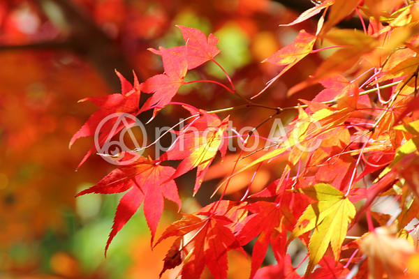 化野念仏寺の紅葉の写真