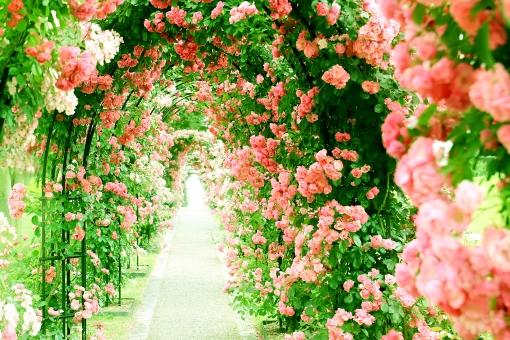 バラのアーチの写真