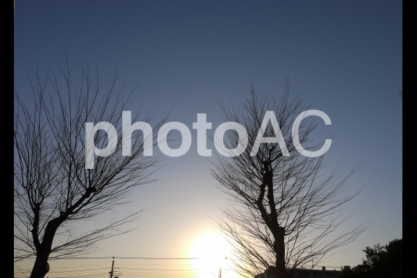夕日と枯れ木の写真