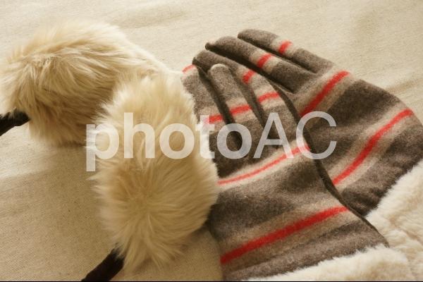 冬支度4の写真