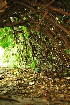 パキスタン 外国 熱帯 南国 南アジア 自然 植物 木 樹木 葉 葉っぱ 緑 光 太陽 太陽光 陽射し 枝 絡まる 多い 沢山 重なる 密集 集まる 交差 アーチ 曲がる カーブ トンネル 地面 土 落葉 枯葉 敷き詰める 落ちる 枯れる 無人 屋外 室外 風景 景色