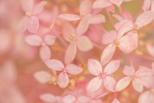 自然 植物 花 花びら ピンク 桃色 めしべ おしべ 花粉 満開 咲く 開花 開く 成長 育つ 密集 多い 沢山 集まる 群生 重なる アップ 無人 室外 屋外 風景 景色 可愛い 鮮やか 綺麗 華やか 美しい ぼやける ピンボケ 加工 幻想的