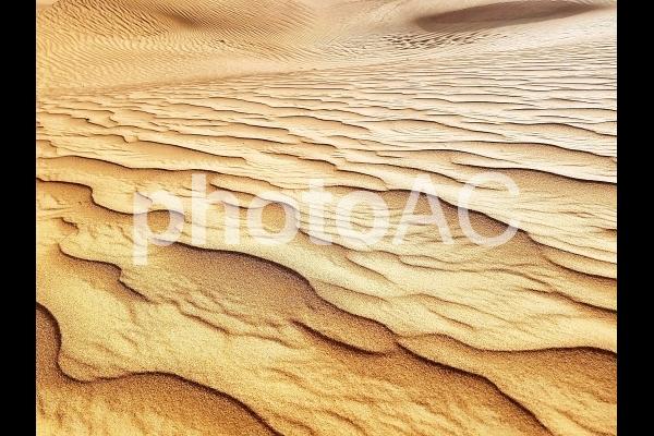 砂漠⑪の写真