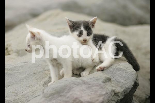 岩猫兄弟8の写真