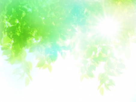 夏の太陽と新緑木漏れ日イメージの抽象背景の写真