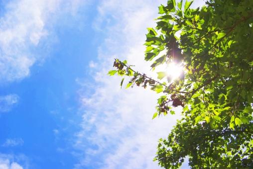 見上げる 植物 夏 空 青空 晴れ 快晴 緑 木 気持ちいい 天気 白 青 ブルー 自然 素材 背景 夏休み 雲 青い空 爽やか 太陽 暑い エコ 背景素材 眩しい 壁紙 イメージ 真夏 テクスチャ 鮮やか 日焼け 白い雲 爽快 空背景 暑中見舞い スカイブルー 猛暑 日射し 晴れやか 照りつける 残暑見舞い バックグランド 雲と空 酷暑 フリー素材 青空と緑