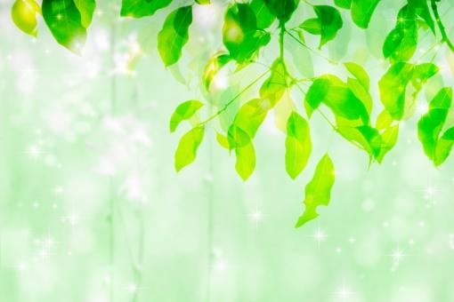 しずく 朝露 水滴 輝く きらめき きらめく キラキラ 光 木漏れ日 葉 葉っぱ 木の葉 露 フレッシュ 清い 清らか エコ エコロジー 自然 風景 背景 やさしい 淡い パステル ヒーリング 安心 爽やか ファンタジー 幻想的 浄化 新緑 緑 森林 森 バックグラウンド 黄色 イエロー 雨上がり 早朝 朝 春 夏 グリーン スピリチュアル 森羅万象 メルヘン 透明感 水彩風 暑中見舞い 梅雨 テクスチャ 秋 涼しい 涼 ポストカード 壁紙 メッセージカード ギフトカード フレーム