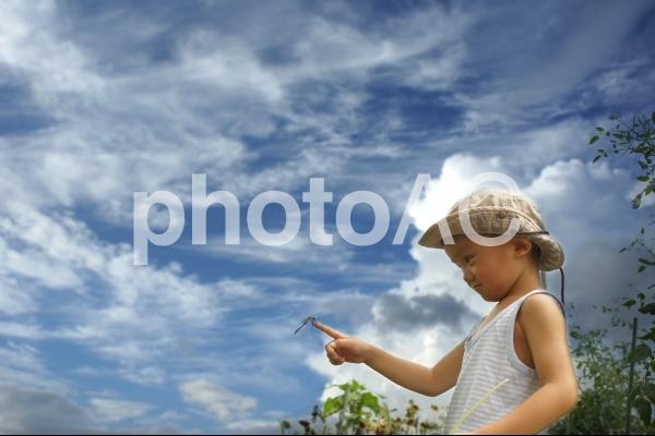 男の子とトンボの写真