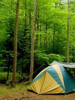 キャンプ テント アウトドア 野営 森 林 杉 緑 新緑