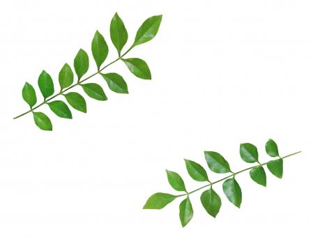 葉っぱ 飾り枠 春 初夏 新緑 フレーム 背景 テクスチャ 緑 グリーン 観葉植物 木 草 自然 ナチュラル みどり はっぱ 爽やか 健やか 植物 森林