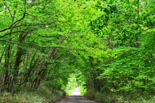 木々 公園の道 歩く道 自然のトンネル 木々のトンネル 自然 風景 植物 樹木 木の葉 森 林 公園 春 木漏れ日 木陰 夏イメージ 夏休み 季節感 ポストカード バックスペース 待ち受け画像 背景 爽やかイメージ 新鮮な テクスチャー 散歩道 石畳 新緑 木漏れ陽 こもれび グリーン 緑のトンネル ととろ トトロ ジブリ風