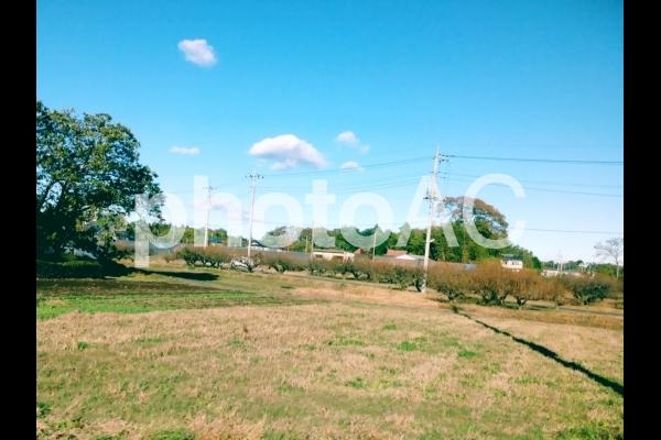 木と空が印象的な田園風景の写真