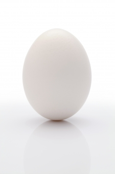 卵 たまご タマゴ 玉子 エッグ フレッシュ フード 白 ホワイト 白色 料理 新鮮 鶏 鶏卵 生 生卵 生たまご 健康 プロテイン 食品 自然食品 食材 食べ物 食事 殻 タンパク質 たんぱく質 モーニング 朝 自然 影 反射 余白 コピースペース 白背景 白バック スタジオ撮影 アップ クローズアップ 一つ 1つ 1個 一個 イメージ 立つ 無人