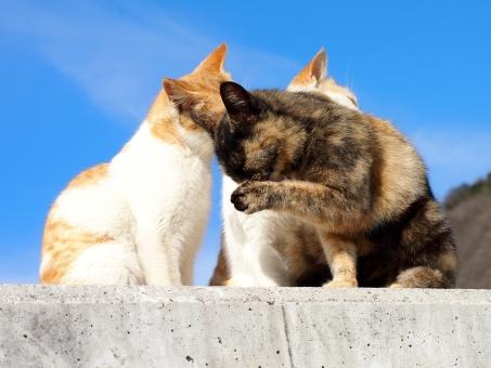 猫島 ネコ島 ネコ島 ネコ ねこ 猫 島猫 島ネコ 島ねこ のら猫 のらネコ のらねこ 野良ネコ 野良ねこ 野良猫 ノラねこ ノラ猫 ノラネコ 野良 のら ノラ 空 青空 青 晴天 快晴 男木島 瀬戸内海 香川県