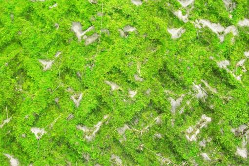 コケ 苔 ブロック コンクリート 壁 緑 緑の壁 背景 テクスチャ コピースペース ブロック塀 塀 カベ 苔ブロック ヘイ こけ 植物 古い