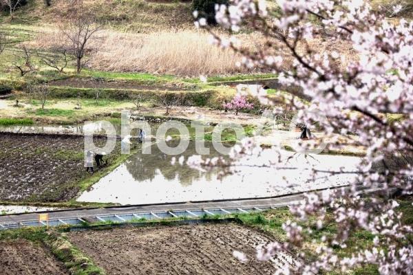 水ぬるむ春、農繁期の準備の写真