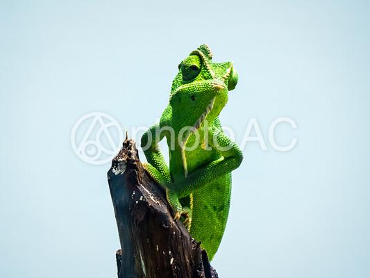 爬虫類28の写真