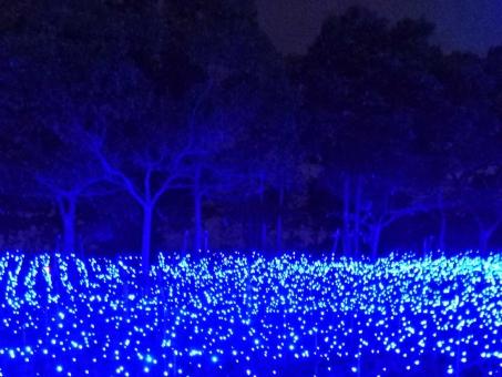 イルミネーション イルミネーション 光 明かり 照明 灯り あかり ライト ライトアップ ライト ライトアップ 光る 輝き 眩しい 輝く きらめき 煌き 煌く 美しい 綺麗 冬 12月 十二月 クリスマス クリスマス 青 電飾 飾り 木 木々