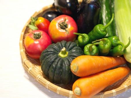野菜 ベジタブル 新鮮 青果 かぼちゃ カボチャ にんじん ニンジン とまと トマト ししとう 獅子唐 とうもろこし ナス 茄子 栽培 育てる JA 畑 農場 農業 無農薬 ファーム ヘルシー 健康的 ハーベスト 収穫 栽培 八百屋 野菜ジュース