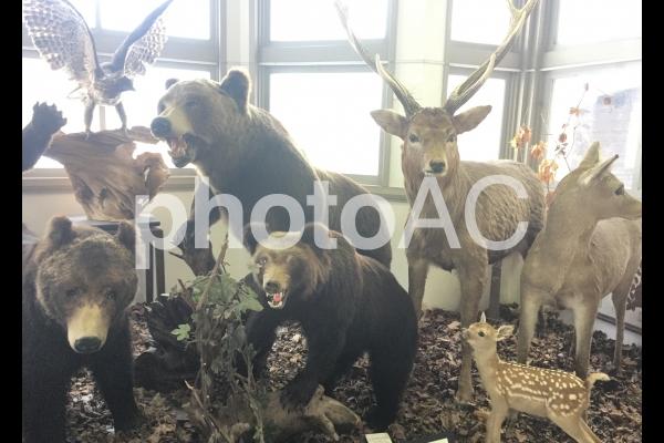 オホーツクの動物の写真