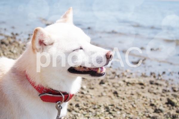 白い犬21(幸せ~♪)の写真