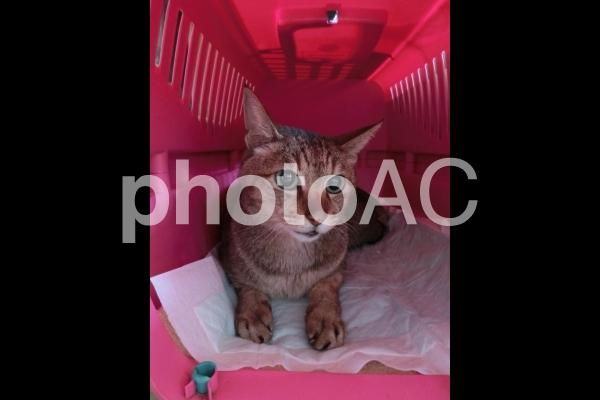 具合の悪い猫2の写真