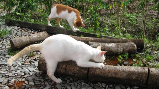 探索 探検 冒険 小学生 幼稚園 小学校 懐かしい 想い出 おもいで 思いで 思い出 あの頃 あのころ 子どもの頃 記憶 グループ 仲良し 仲よし 仲良しグループ 近所 ネコ 猫 ねこ 運動 ハイキング 遠足 林間学校 田舎 いなか ふるさと