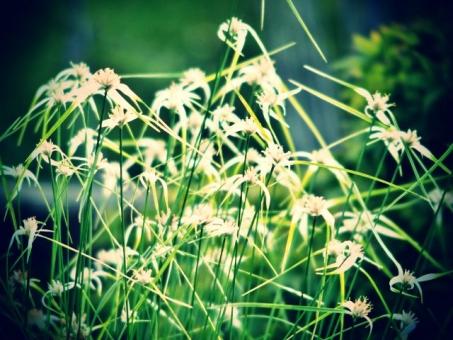 花 植物 花壇 白 植物園 レトロ トイフォト