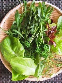 ベランダ菜園 フレッシュ 野菜 サラダ パセリ スプラウツ ルッコラ 摘み取り ダイエット 酵素 ビタミン 朝取り