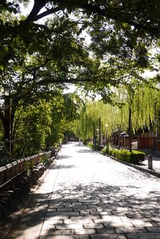 京都 きょうと 古都 日本 京都府 京都市 関西 歴史 旅行 風情 情緒 景色 風景 世界遺産 ユネスコ 世界文化遺産 町並み 街並 日本家屋 伝統 歴史 旅行 観光 和 石畳 道 自然 樹木 植物 木陰