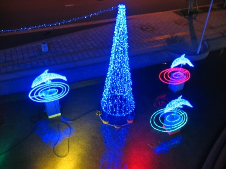 冬 冬休み 1月 2月 12月 イルカ 旅行 鹿児島 イルミネーション 赤 青 黄色 ピンク 水 寒い 光 港