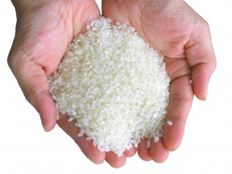 食品 おいしい おいしそう ナチュラル 穀物 植物 自然 食材 材料 素材 新鮮 収穫 田んぼ 美しい 稲 稲穂 秋 主婦 手 親指 小指 人差し指 切抜 切り抜き きりぬき キリトリ 切取 切り取り 背景白 幸せ て 人間 人物 かしぐ 炊ぐ 新米 米 ご飯 ごはん 白米 お米 コシヒカリ ササニシキ あきたこまち 食べ物 料理 和食 和風 フード 箸 食物 日本食 和風料理 日本 和 シンプル 栄養 健康 健康管理 食事 恵み 自然の恵み らいす ライス 女性 男性 米粒 こめつぶ コメツブ 手と米