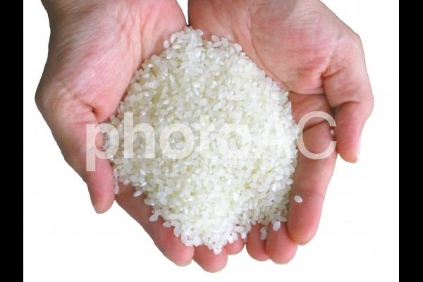 お米の手の写真