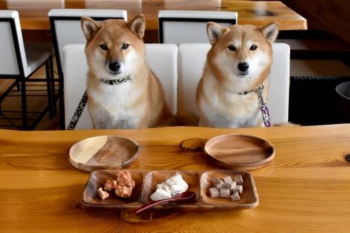 柴犬・ごはん待ちの写真