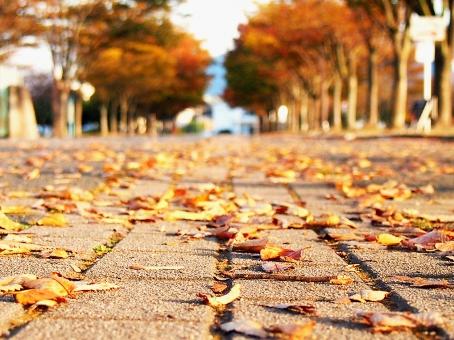 「秋 道」の画像検索結果