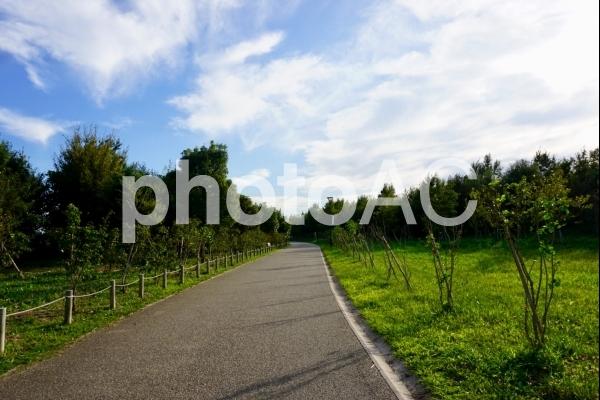 散歩道の写真