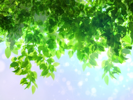 緑 グリーン 黄緑 新緑 明るい 森 植物 木 若葉 自然 春 初夏 葉っぱ 癒し リラクゼーション 葉 木漏れ日 輝き マイナスイオン 爽やか 森林 眩しい 5月 背景 テクスチャー バックグラウンド 雲 青空 空 空気