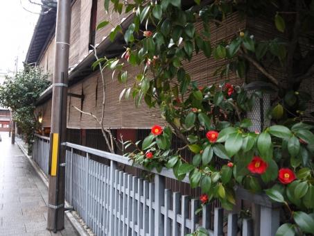 風景 景色 さざんか 街並み 和 建物 木造建築 和風 日本家屋