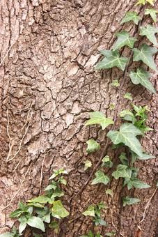 木 木の幹 樹皮 木の皮 茶色 木肌 背景 背景素材 バックグラウンド 植物 自然 テクスチャ 模様 樹木 幹 葉 つる ツル植物