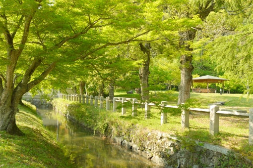 新緑 公園 緑 グリーン 椛 もみじ モミジ かえで カエデ 楓 樹木 木 葉っぱ 葉 青葉 若葉 和風 和 日本 庭園 美しい 綺麗 きれい 風景 自然 壁紙 背景 景色 小川 植物 五月 5月