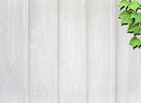 木目 木 板 植物 葉 壁 背景 背景素材 テクスチャー テクスチャ 緑 メッセージカード コピースペース ツタ 白 白壁