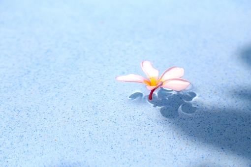 南国 南の島 常夏の国 南方の楽園 ビーチリゾート リゾート 南の国 癒し 観光地 観光都市 旅行 旅 トラベル 休日 バカンス ホリデー バケーション 自然 スナップ 花 植物 ピンク 花びら 5枚 プール 影 プラメリア スパ エステ バリ  プルメリア